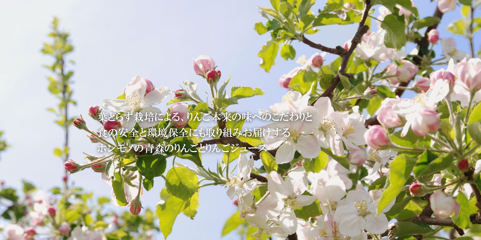 青森の葉とらずりんご HAPPYHAPPAメインイメージ3