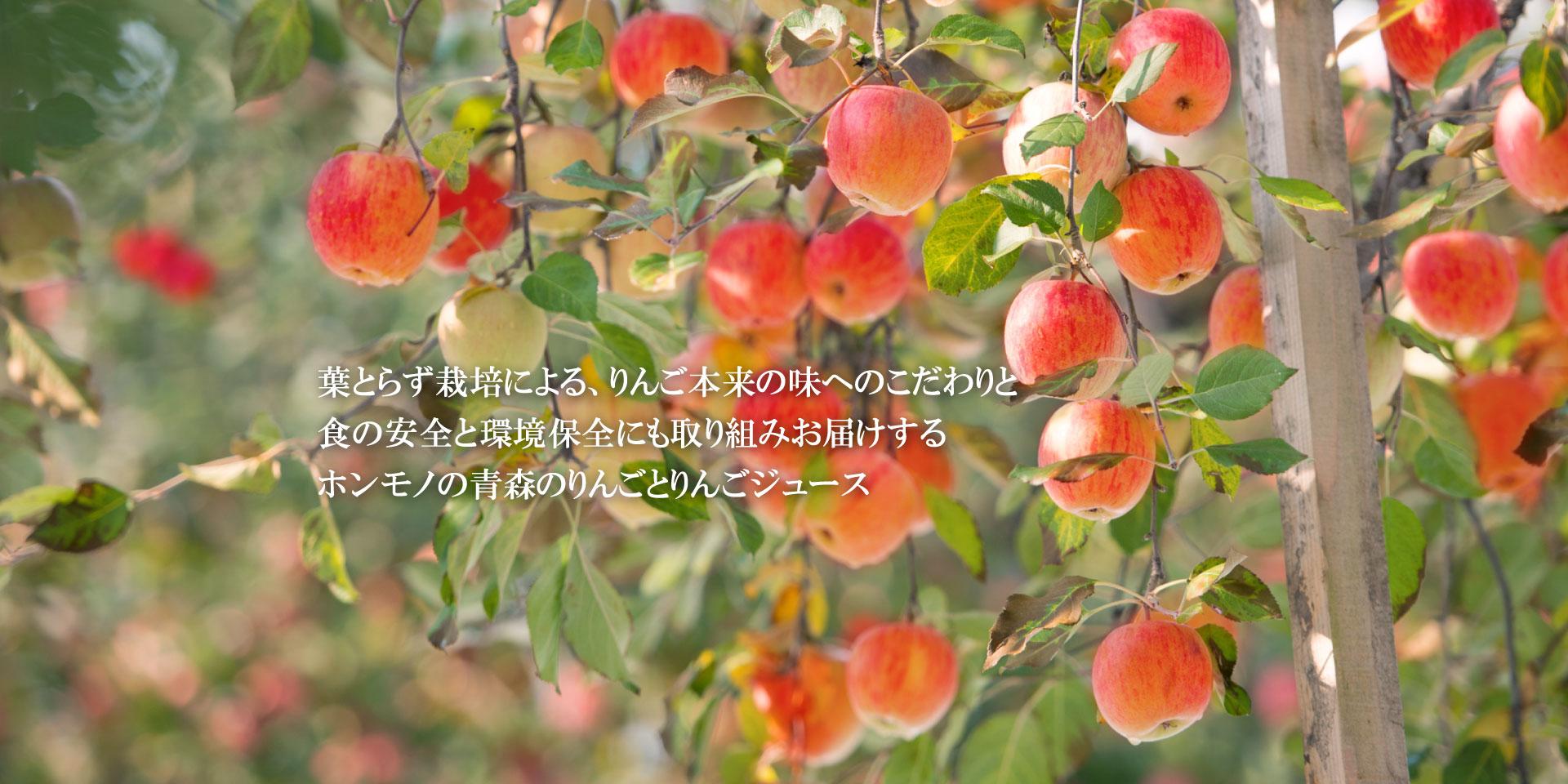 青森の葉とらずりんご HAPPYHAPPAメインイメージ4